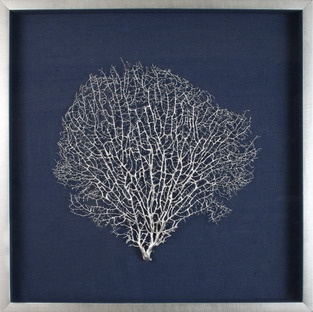 Large natural coral sea fan finished in silver lacquer, floated on navy