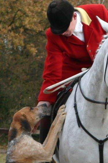Ride a Cross Country Hunt (man-laid scent trail, no fox killing for us)