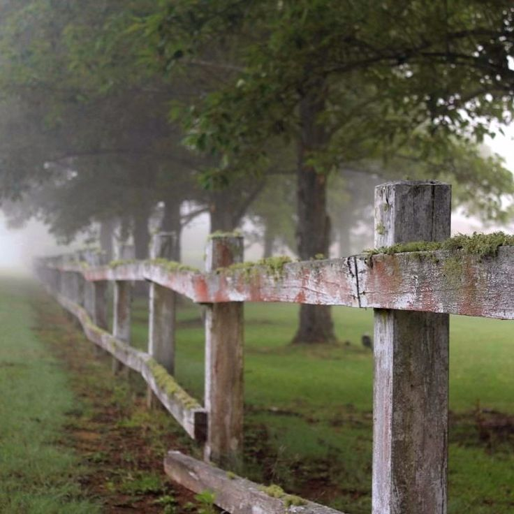 I have no idea what it is about old timber fences and gates.  Add a misty morning and my cup runneth over. #startthedaywithsomethingbeautiful