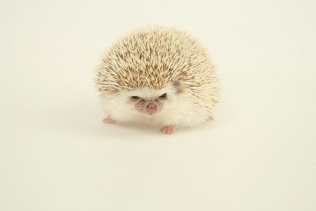 So sweet!  Portrait of the Hedgehog as a Young Man by PPUURRR, via Flickr