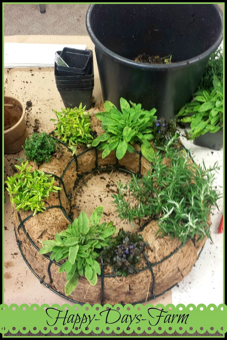 This is gardening and crafting for the kitchen!! LOVE IT!!~SS   Happy Days Farm: A Living Herb Wreath Project