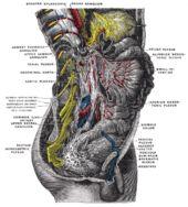 Celiac plexus - Wikipedia, the free encyclopedia