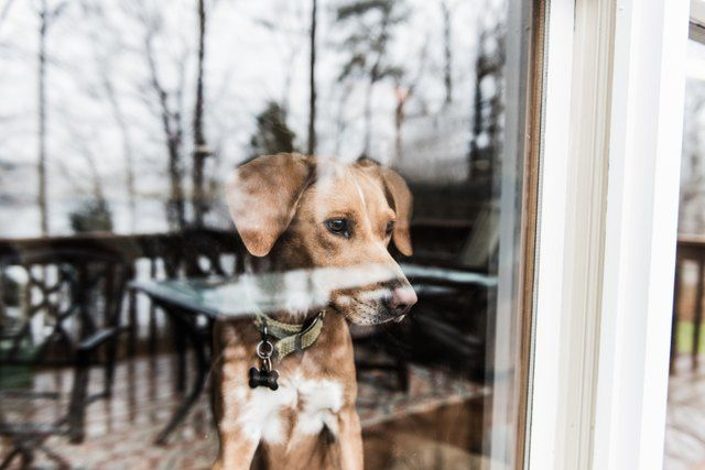 How To Stop A Male Dog From Marking Territory In A House In 2019