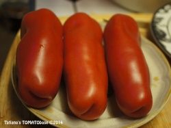 New for 2016. Auria.  This variety came from the Ukraine.  Indet. spindly plants with wispy regular leaf foliage. Large elongated red paste tomatoes with dry flesh and a suggestive shape. 4-5 oz. Very good sweet flavor. Perfect for sauce! In some Ukrainian seed catalogs it is sometimes referred to as 'Adam' (as in 'Adam and Eve'), probably in reference to its unique shape.