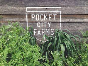 Pocke City Farms-Farming Sydney's unused spaces