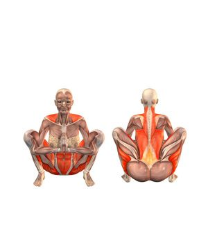 Seated squat - excellent for the spine. Sit in this position during the day, neutralise the spine.