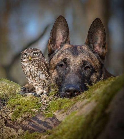 Conoce la inusual amistad entre un búho y un perro