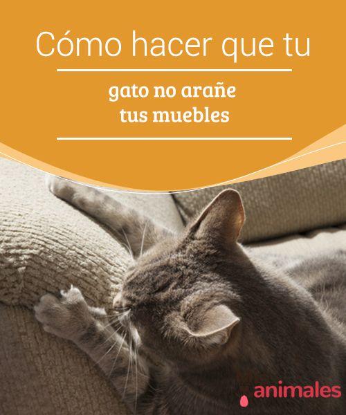 Cómo hacer que tu #gato no arañe tus muebles  El que un gato pueda #arañar tus muebles y otras cosas de la casa podría ser la principal razón por la que muchas #personas se piensen seriamente si quieren #adoptar un minino.