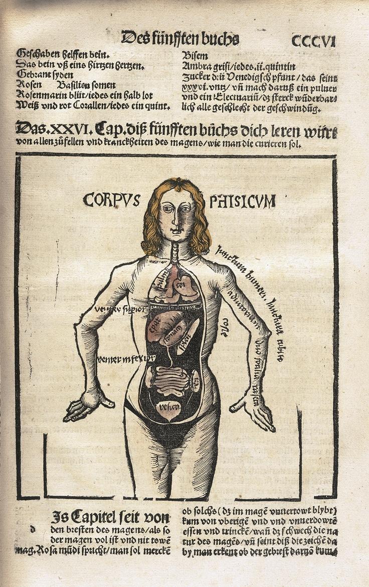Mejores 33 imágenes de Anatomica en Pinterest | Anatomía humana ...