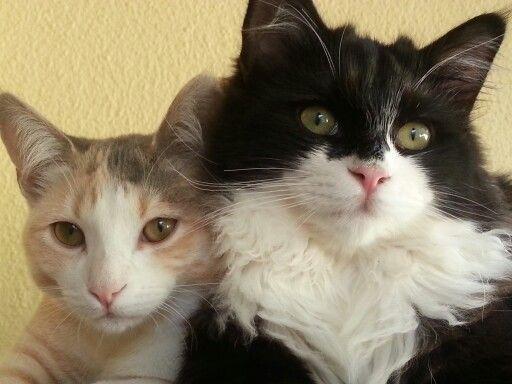 Kittens in the morning
