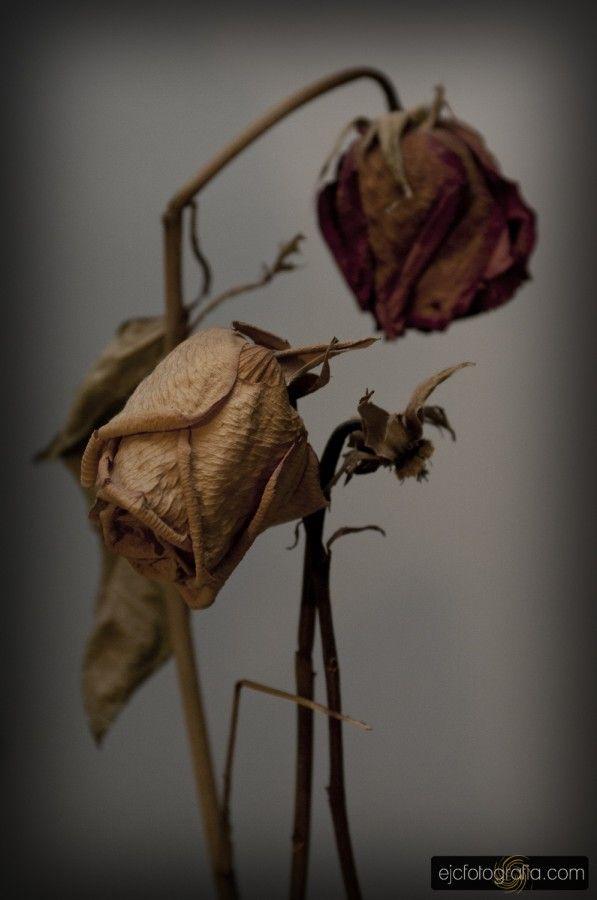 Naturaleza muerta. Proyecto 365 (2014): 138