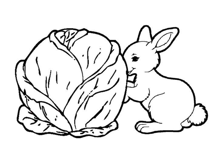 Mon petit lapin sest 786 546 pixels pour les - Mon petit lapin s est cache dans le jardin ...