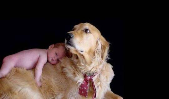 Las mejores razas de perros para los niños y la familia - ORBICANES.COM