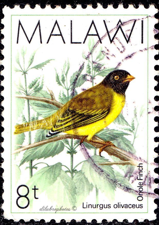4032 best znaczki images on pinterest lwren scott