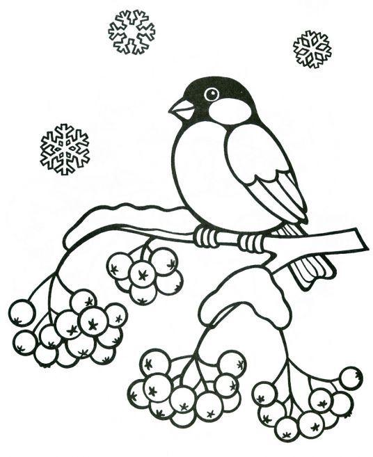 Снегирь на рябине раскраска - Ru kartinki