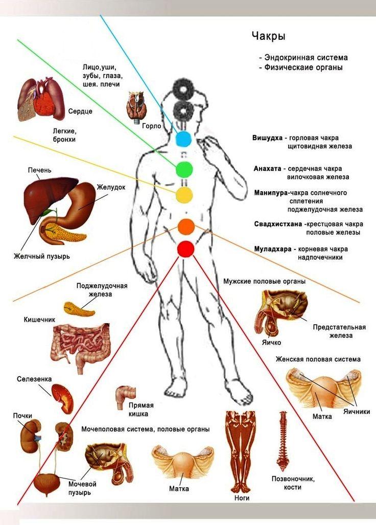 Ф. Чакры & Органы тела