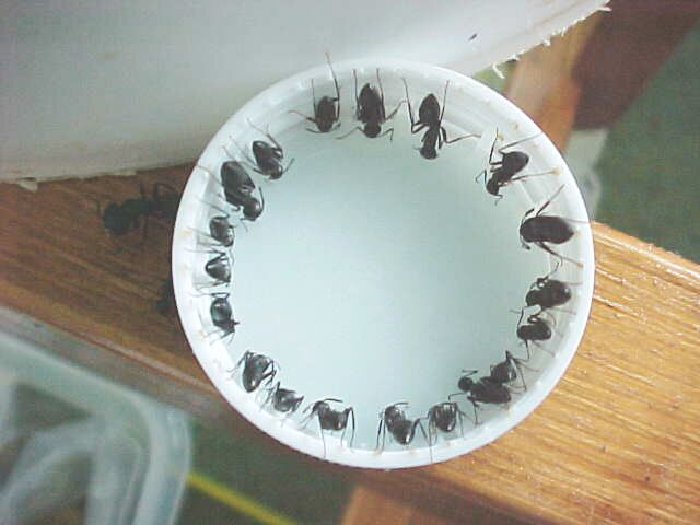 Ant Killer Recipe. ** CAUTION** Toxic! Keep out of the reach of children and pets!