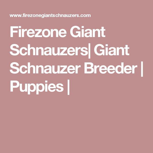 Firezone Giant Schnauzers| Giant Schnauzer Breeder | Puppies |