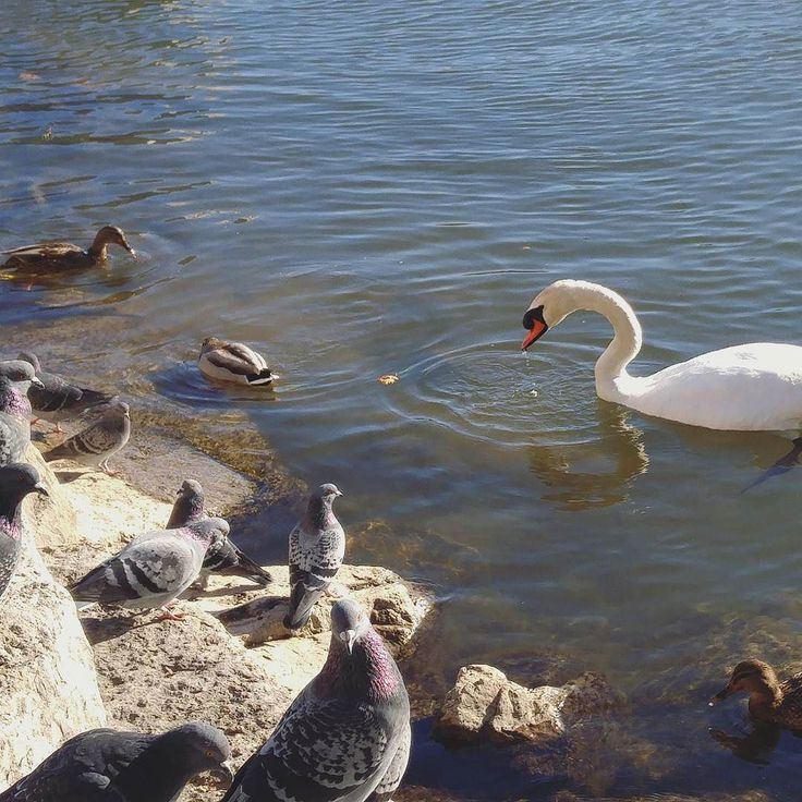 The beautiful weather continues! Take a walk at lunch today and soak up that vitamin D while you can like these feathery friends! #toronto #gta #portcredit #lunch #adventure #walking #hike #waterfronttrail #discoverontario