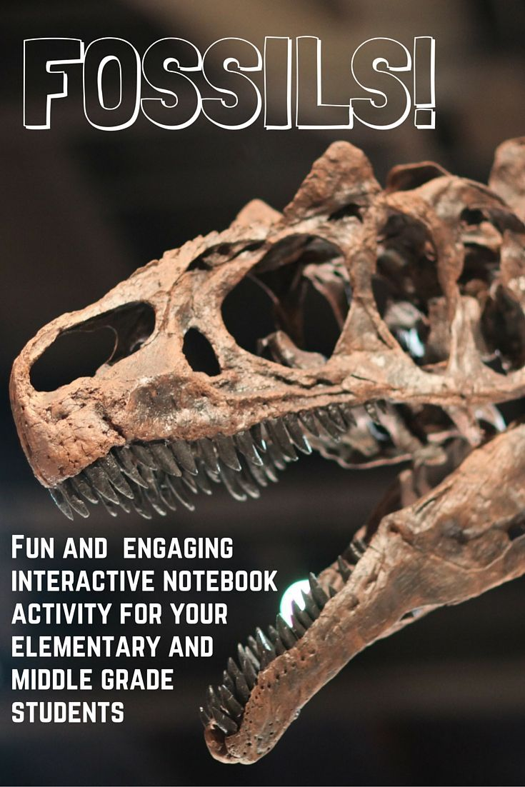 What idea did hardy and weinberg disprove - Science Reading Interactive Notebook Build A Dino Lab Fossils Elementary Jr High