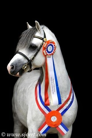Champion Welsh Pony Who couldn't love that face?!!