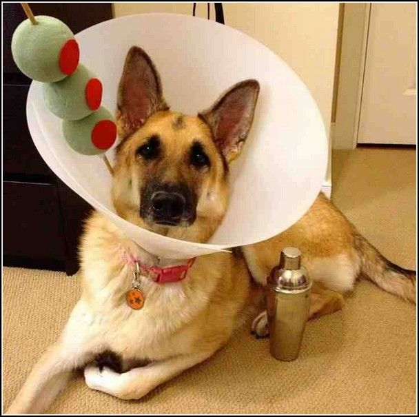 Sweet Halloween Costumes For Dogs With Cones & Big Dog Lying On ...