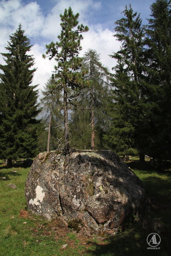 Abete sulla #roccia… #incredibile ma vero come ha fatto a #crescere proprio lì...