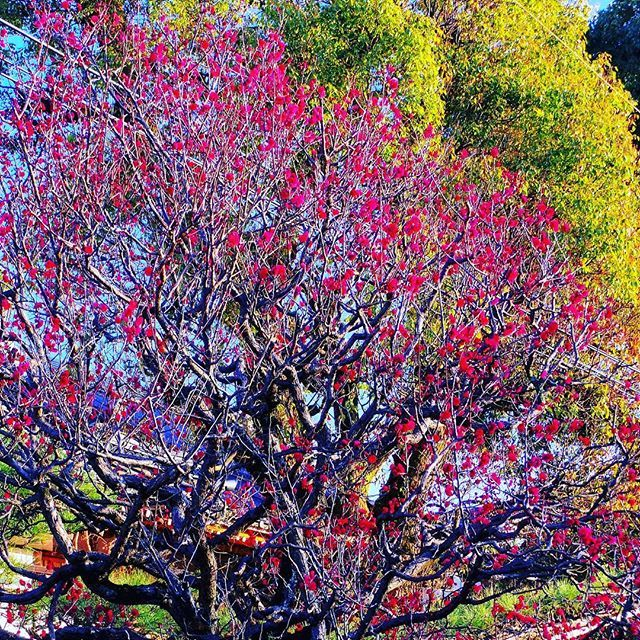 Spring is coming to Japan 🇯🇵 // A tavasz lassan megérkezik Japánba 🇯🇵 #szegedbudokan #martialarts #academy #japan #japanese #spring #travel #world #nature #blossom #flowers #mylife #inspiration #sunshine #budo #zen #garden