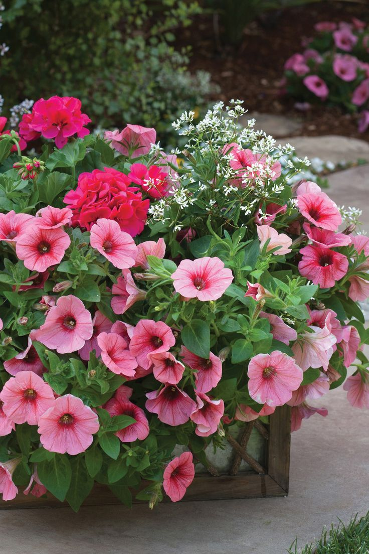 182 Best Garden Center Images On Pinterest