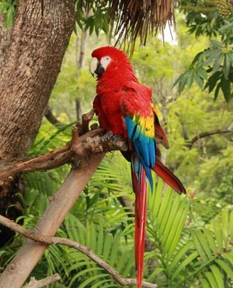 an introduction to the experience of living in a rainforest Introduction the birds sound  birds-of-paradise use pigments to grow vivid feathers as well as iridescence to produce a  they dance on the dim forest floor,.