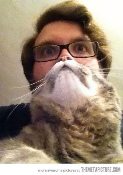 The Cat BeardPhotos, Funny Things, Cat Face, Laugh, Cat Beards, Funny Stuff, So Funny, Catbeard, Animal