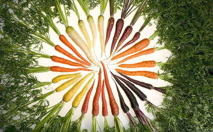 Polskie firmy, które tworzą nowe odmiany roślin rolniczych i warzyw, będą miały dostęp do najnowszych technologii. Dzięki temu będą szybciej wdrażać na rynek odmiany nowe, lepiej dopasowane do zmieniających się warunków klimatycznych i zmieniających się potrzeb rolników i konsumentów.  http://www.malopolska24.pl/index.php/2014/03/branza-hodowli-roslin-laczy-sily-z-uniwersytetem-w-krakowie/