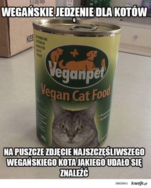 Vegański kot