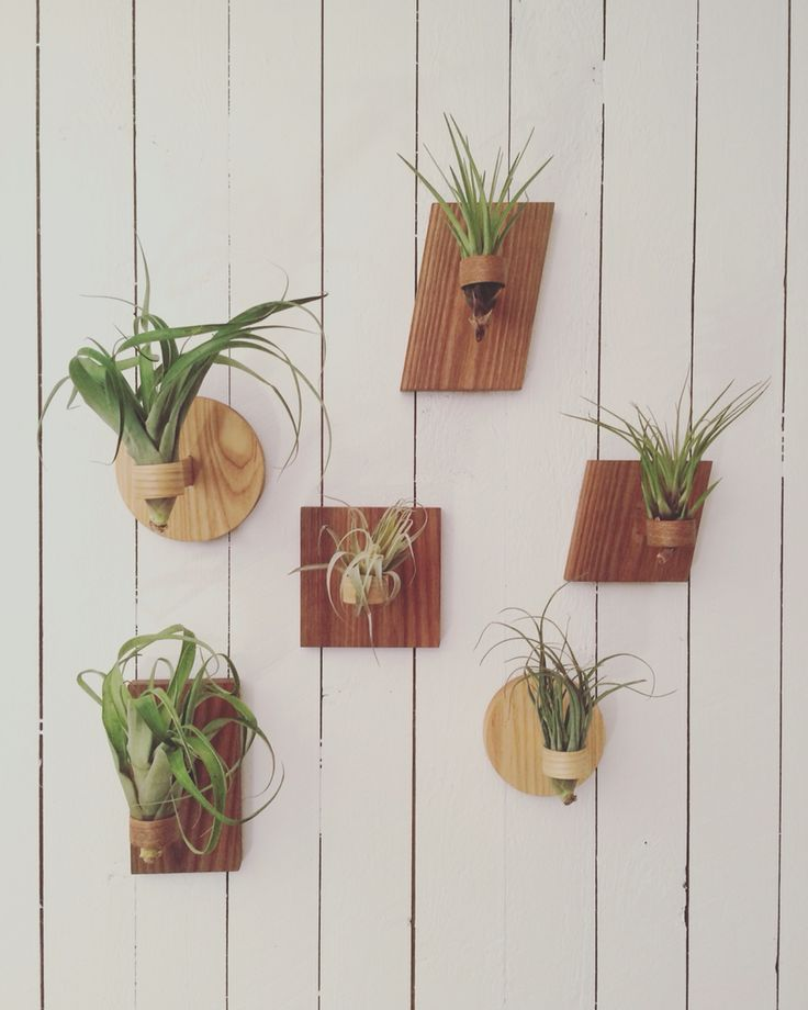Air plant holders. A work in progress, soon available at aeroteket.com