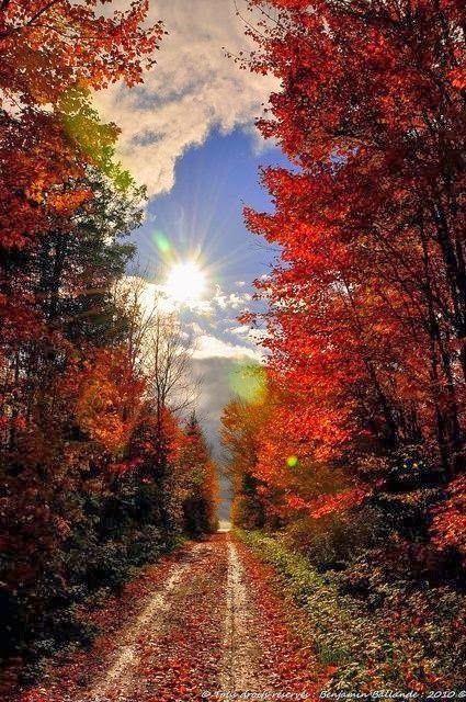 Beautiful Tunnel of light