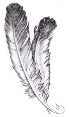 Eagle Feather Sketch