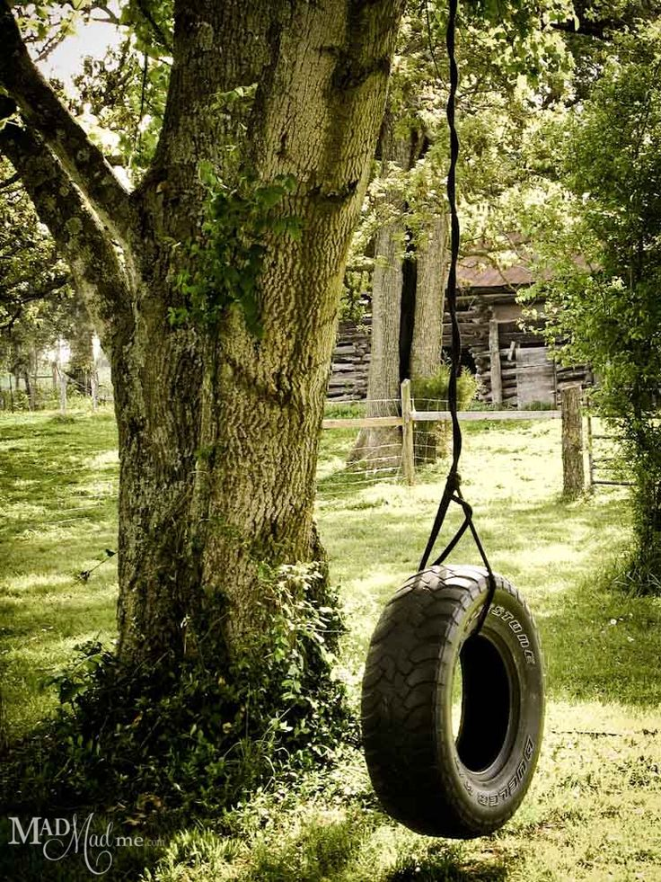 Tire swing on a very old tree...