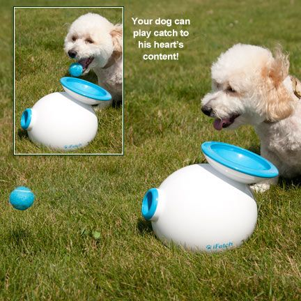 Every dog who plays fetch needs to learn how to drop the ball in this thing.  iFetch Interactive Dog Fetch Toy