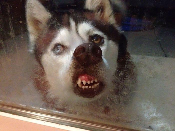 Os animais adoram janelas!