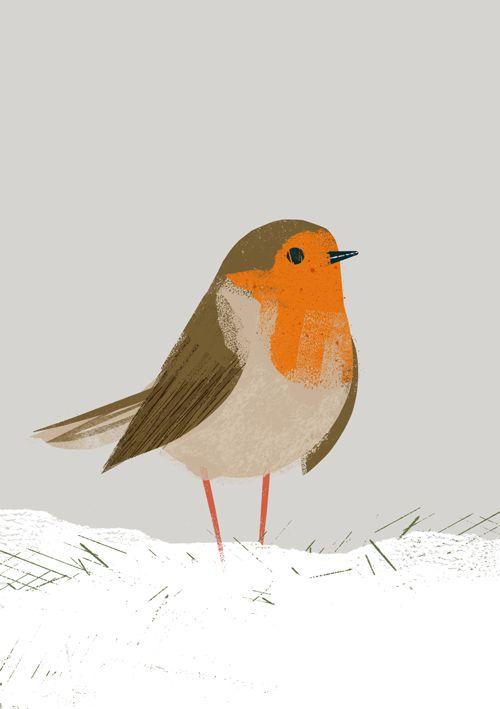 Robin by Chris Madden Illustration