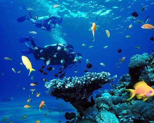 Añade una experiencia más a tus circuitos por Costa Rica viajando a la Isla del Caño, situada al oeste de esta. El Buceo en Isla del Caño es una actividad de lo más recomendada, dada la gran cantidad de fauna marina y corales que allí se encuentran. Tu viaje para bucear en la Isla del Caño lo puedes ver aquí http://www.felicesvacaciones.es/ofertas-viajes-baratos/buceo-isla-cano/