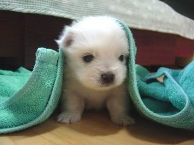 cute dog image by monze_roo - Photobucket