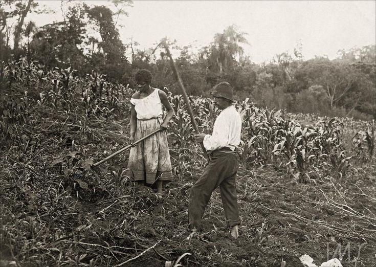 """Navegação por local """"São Paulo"""" Roça de milho, Pastore Vicenzo, 1910."""