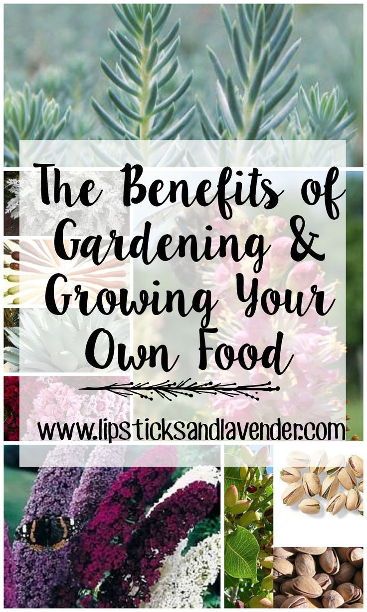 What are the benefits of planting your own garden and growing your own food? Gardening is a great stress relieving activity.