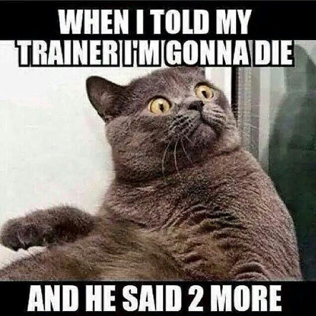 Best 25+ Personal Trainer Humor Ideas On Pinterest