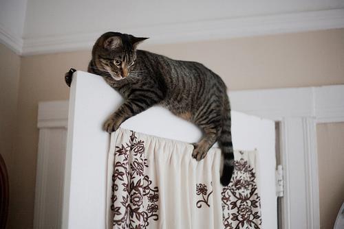 gato escalador