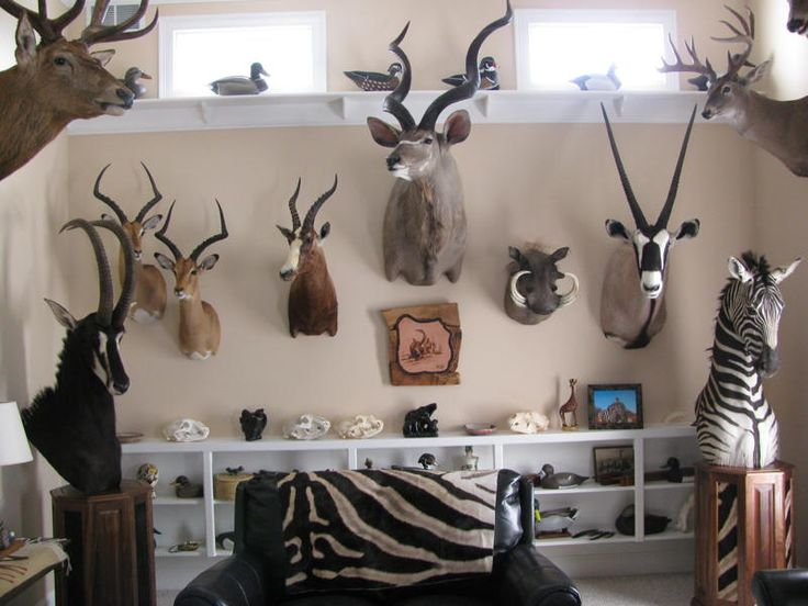 10 best images about taxidermy trophy rooms on pinterest for Animal room decoration games