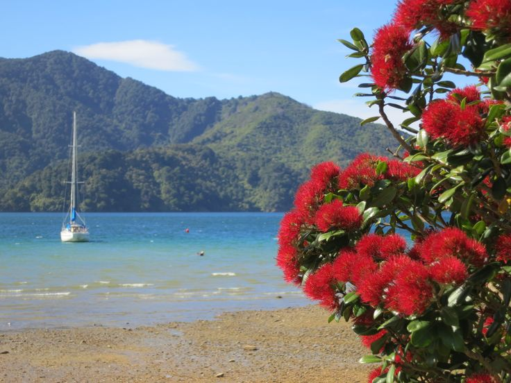 The Queen Charlotte Sound in New Zealand
