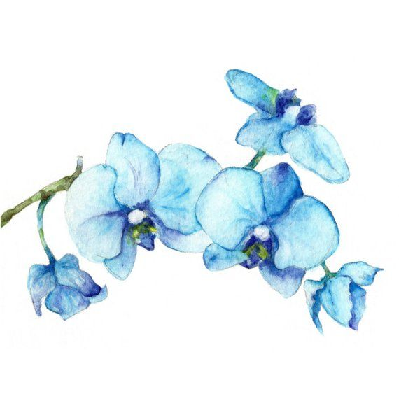 Bleu Orchidees One Botanique Art Print De Peinture Aquarelle