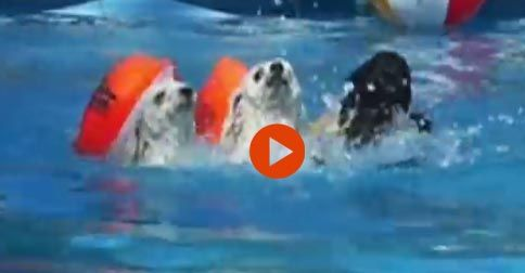Dogs Love Swimming #Funny#Cute#Dogs#Adorable#Animals